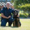 An unlikely story about the working rottweiler keeping our prisons safe